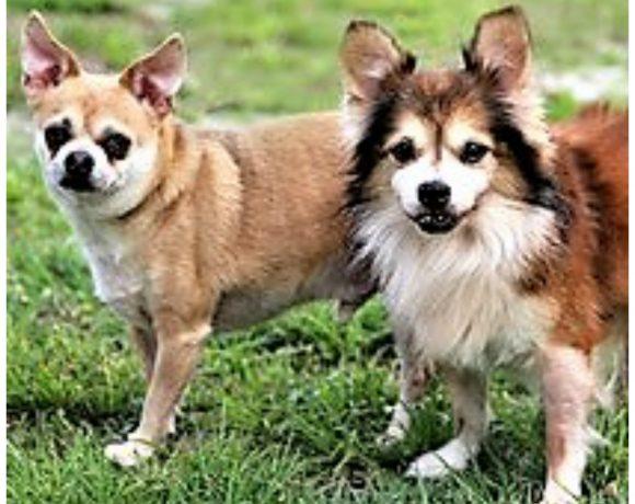 Buddy & Sparky